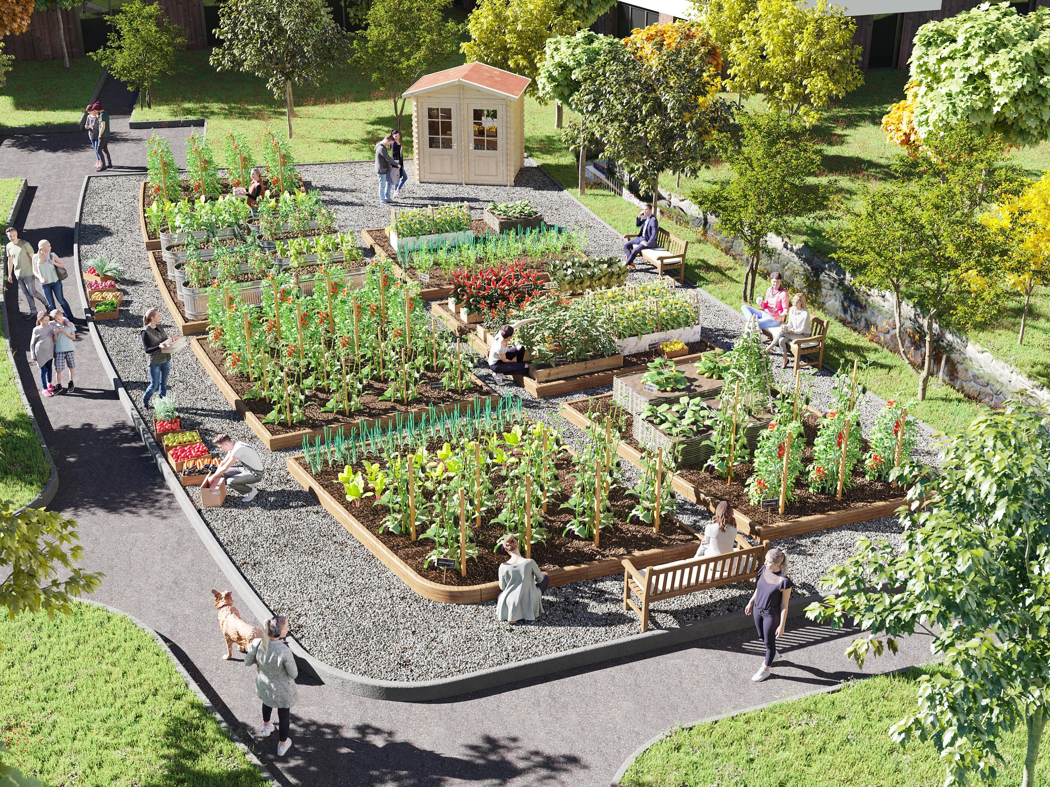 jardin-partagé